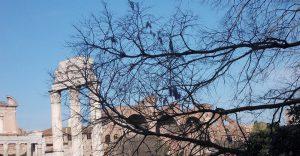 PRIMAVERA A ROMA (di David Taglieri)